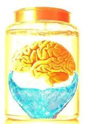 final-brain1.jpg