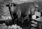 1367092758_bull-china-shop